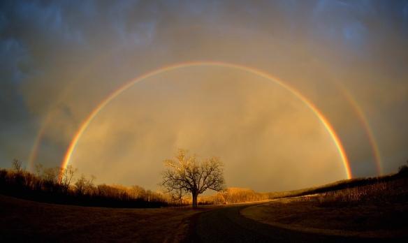 rainbow_elam_21